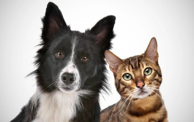 Do you understand dogs and cats when we talk to them?