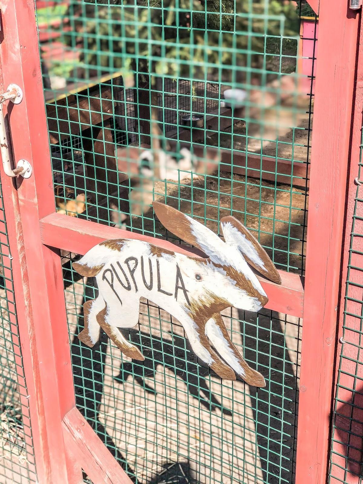 Yli-Marolan 4H-kotieläinpihalla