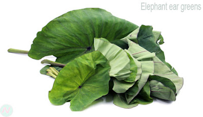 Elephant ear greens