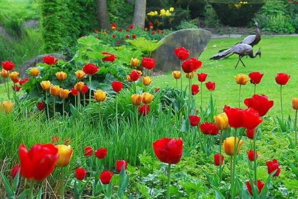 тюльпаны + герань садовая + ирис сибирский