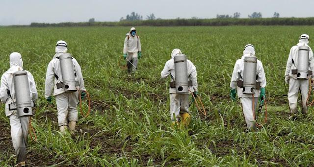 Αποτέλεσμα εικόνας για Πενταετής άδεια από την κυβέρνηση στο ζιζανιοκτόνο της Monsanto