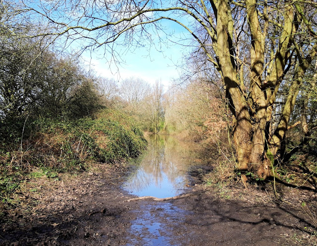 Image shows a flooded path leading into the distance, framed by trees
