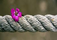 Pregare per la comunione con Dio e praticare la giustizia per quella con i poveri nel simbolo del fiore e della corda.