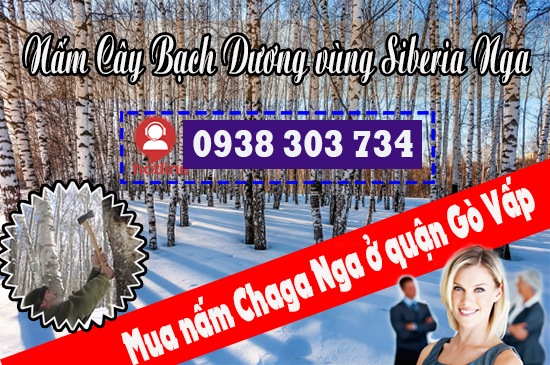 Mua nấm Chaga Nga ở quận Gò Vấp