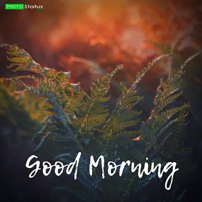 morning status, good morning 2 line status