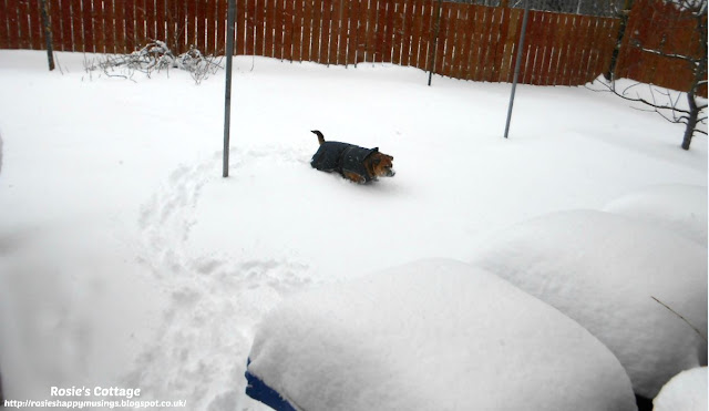 Our furbaby Jade braves the snow in her back garden.