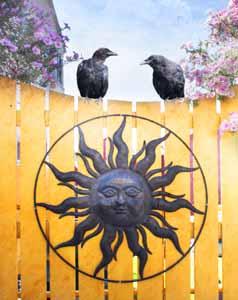 Photographic Art Sunny Days by Sara Harley
