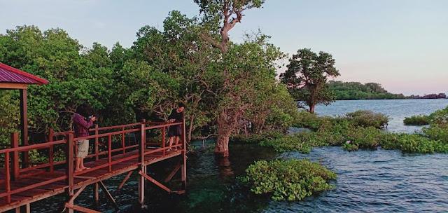 mangrove rewataa