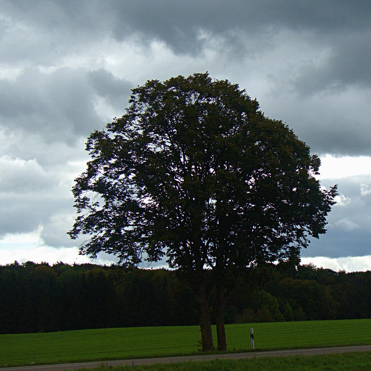 Bäume am Straßenrand