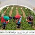 تشغيل 30 عامل و عاملة فلاحة بمدينة اشتوكة آيت باها