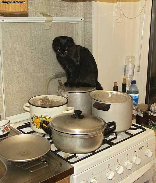 Cats In The Kitchen Island Casters Diabetic Need Cat S Cookbook Does Your Know Difference Between Filet Mignon And Of Sole She Help You Do Have A Dish That Leaves Family