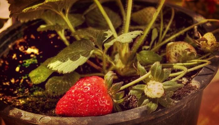 Plantas fáciles de cultivar en macetas
