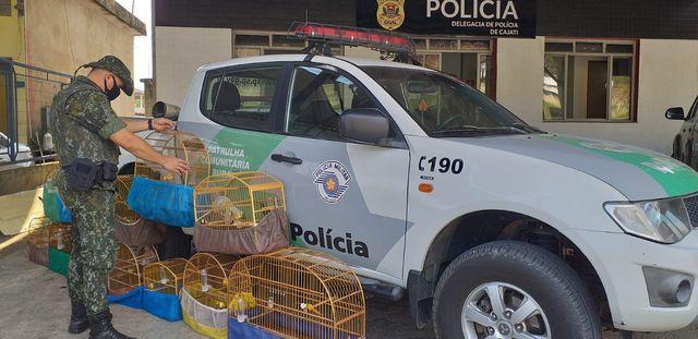 Policia Ambiental apreende 12 espécies de pássaros silvestres em Cajati