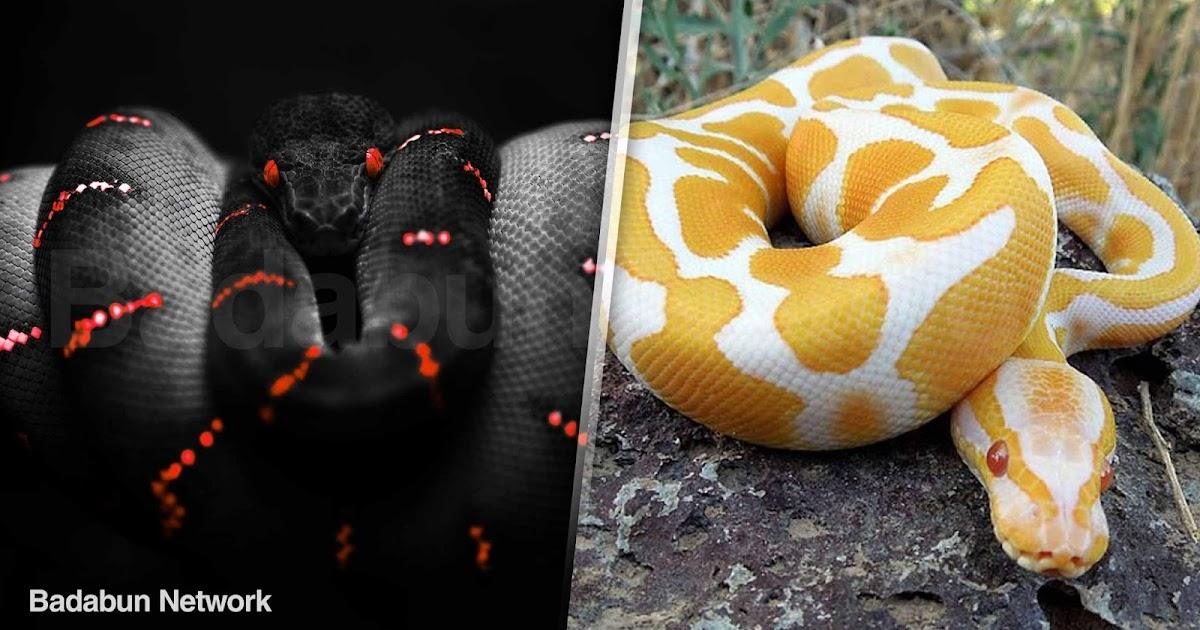 Serpientes culebras venenosa miedo picadura muerte animal naturaleza