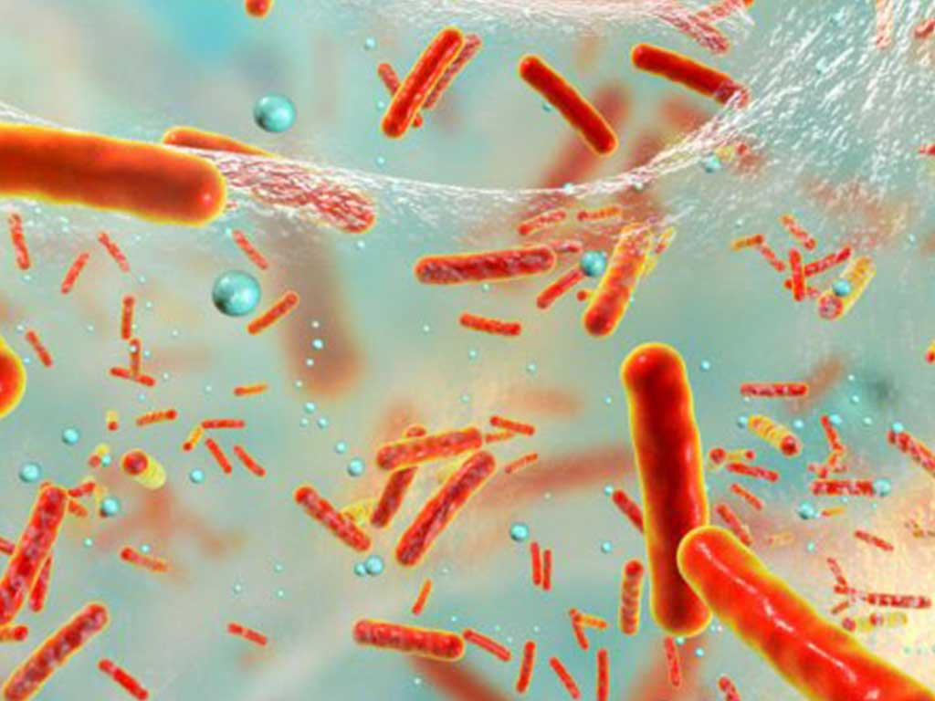 Bakteriler Tek Hücreli Mikroorganizmalar
