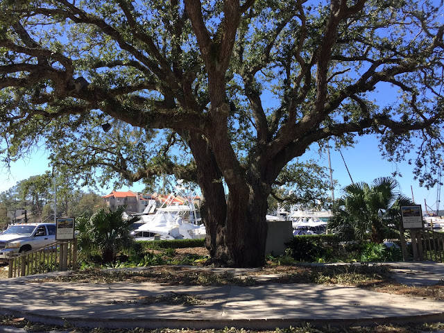 hilton head island harbour town liberty oak tree after matthew
