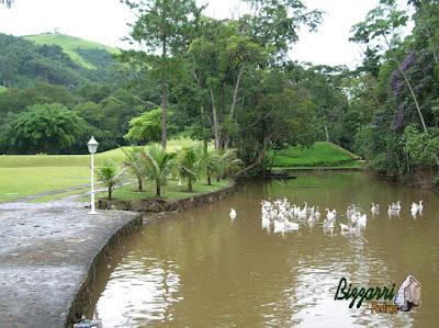 Construção de lagos com muros de pedra em volta com pedra moledo com o gramado em volta com grama esmeralda em sítio em Nazaré Paulista-SP.