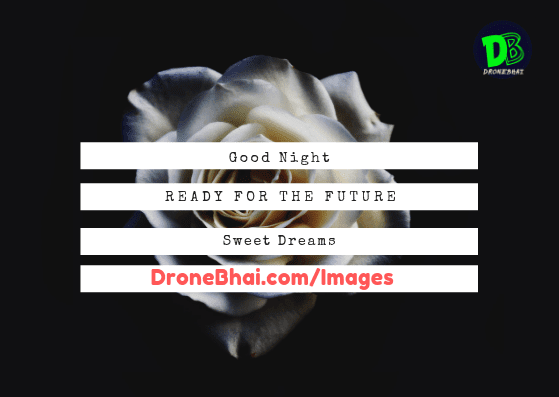 Goodnight images with white rose