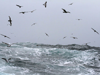 Photo of seabirds flying over raging seas during a storm