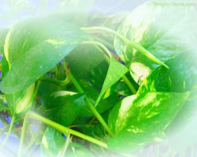 Plantas para purificar o ambiente