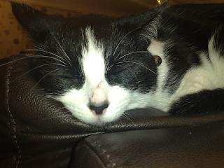 cat-harness