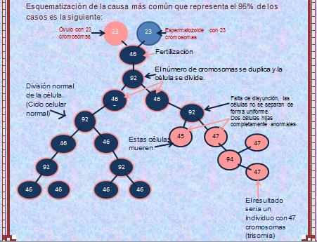 Blog bitacora de una estudiante virtual el ciclo celular for Que represente 500 mo