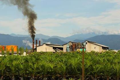 Lowongan Kerja Pabrik Kelapa Sawit Di Riau Juli 2019