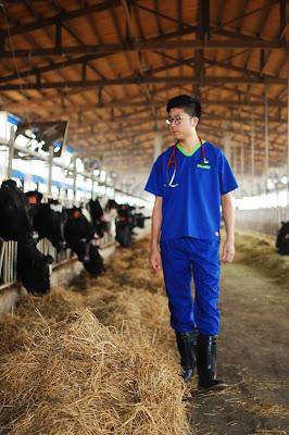 巡診全台三十多個乳牛牧場,照顧七千頭牛的健康