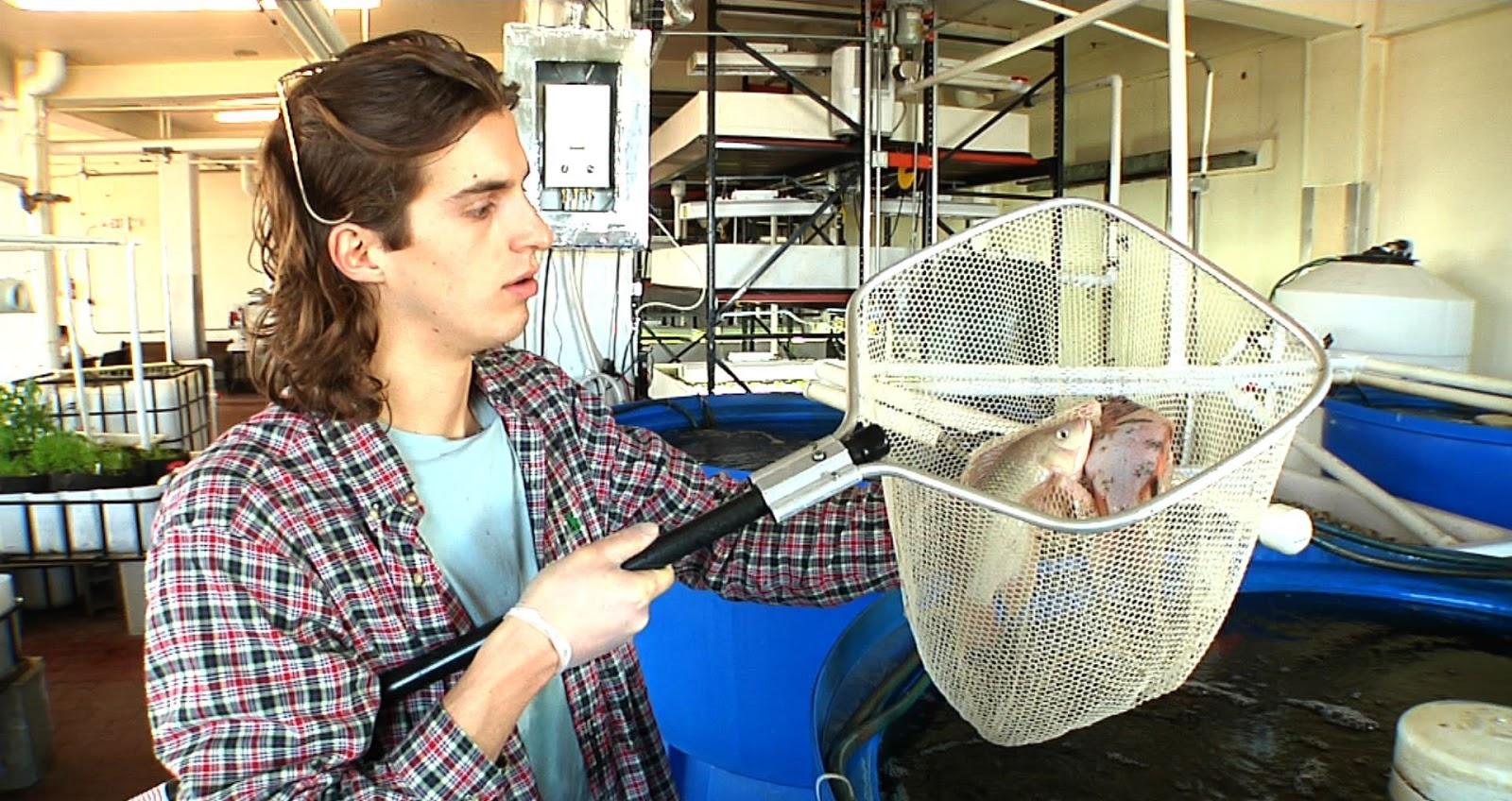 Asesor a trucha y tilapia cultivos rentables en muy poco for Criadero de pescado tilapia