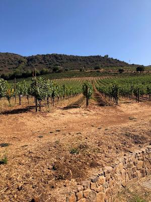 Repris Wines Vineyards