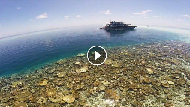 Maldives Dreaming