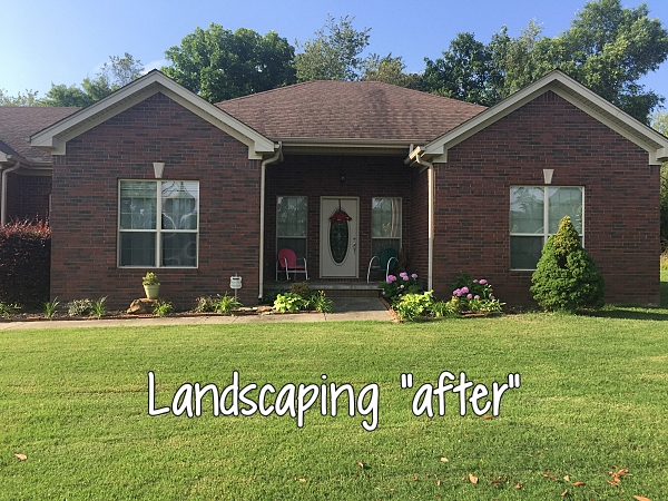 landscaping after removing shrubs and adding flowers