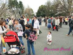 日本東京上野櫻花
