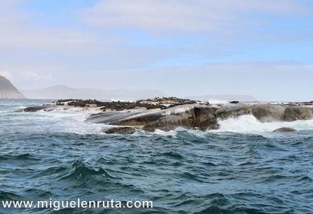 Isla-Duiker-Hout-Bay-Sudáfrica