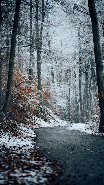 HD Wallpaper Winter, Nature, Forest, Trail, Snow, Trees