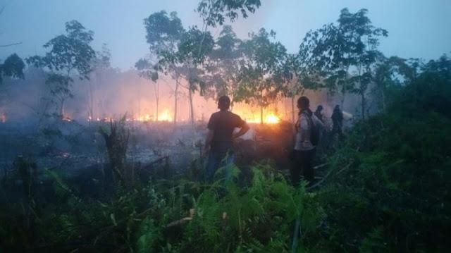 Pengamat: Soal Karhutla, Jokowi Tidak Akurat!