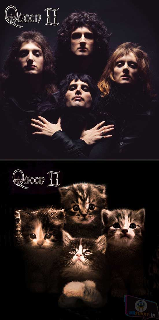 Classic Album Covers Recreated With Cats