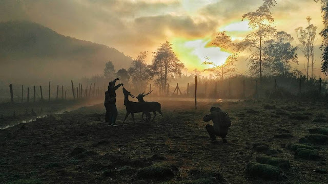 Bermain dengan rusa di Ranca Upas Bandung
