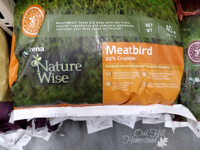 What to feed your Cornish Cross meat chickens.