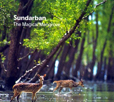 Sundarbans images wallpaper Royal Bengal Tiger