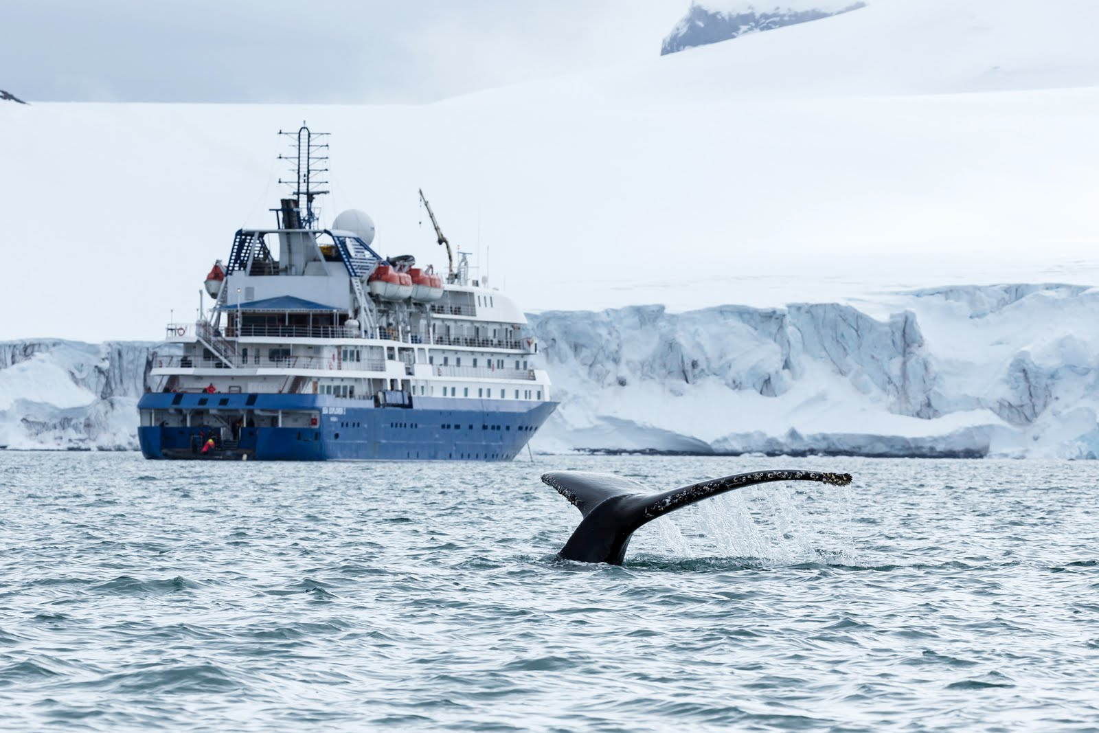 New Express Cruise And Fly Journey To Antarctica