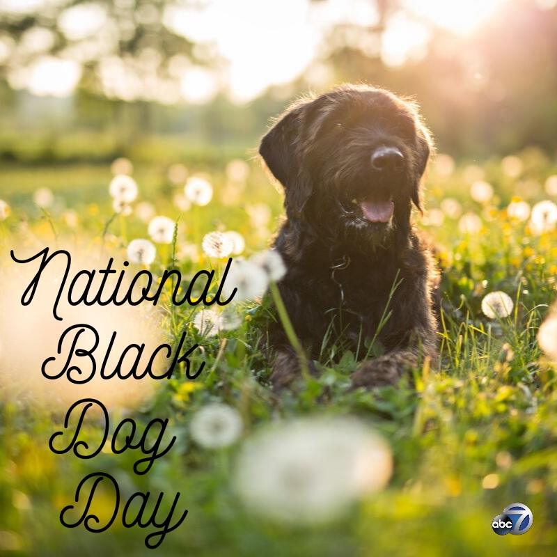 National Black Dog Day Wishes Awesome Picture