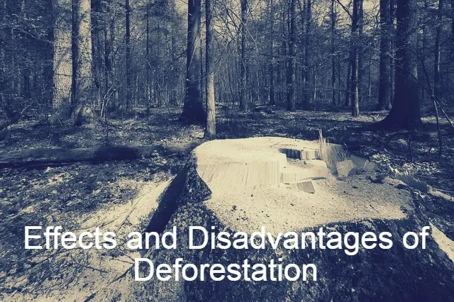 Effects and Disadvantages of Deforestation