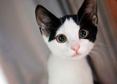 صور صور قطط كيوت 2020 خلفيات قطط جميلة جدا 983630_2630575238655