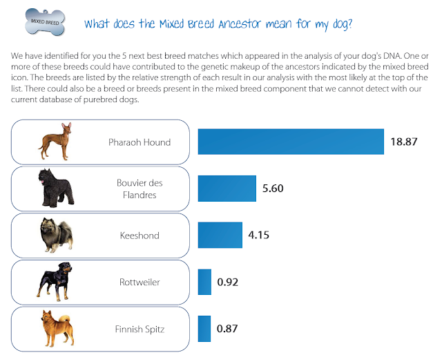Jada's mixed breed ancestors from wisdom panel