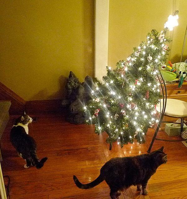 Chùm ảnh thú cưng... tàn phá Giáng Sinh