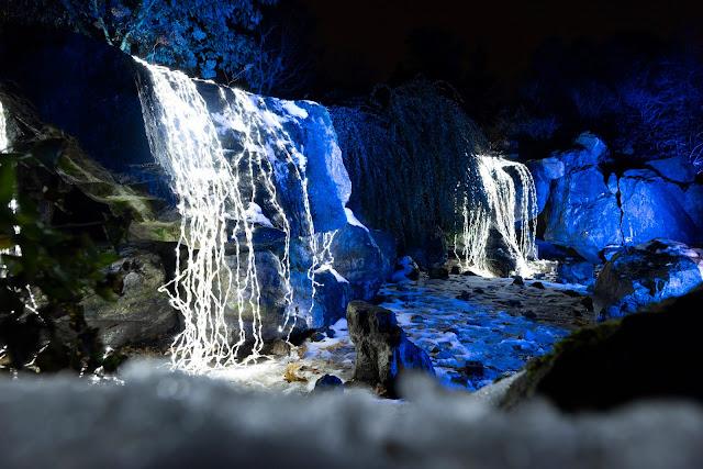 Waterfall Lights at Chicago Botanic Garden's Lightscape. Image courtesy of Chicago Botanic Garden.
