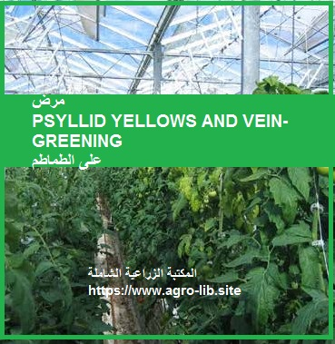 مرض PSYLLID YELLOWS AND VEIN-GREENING  على الطماطم