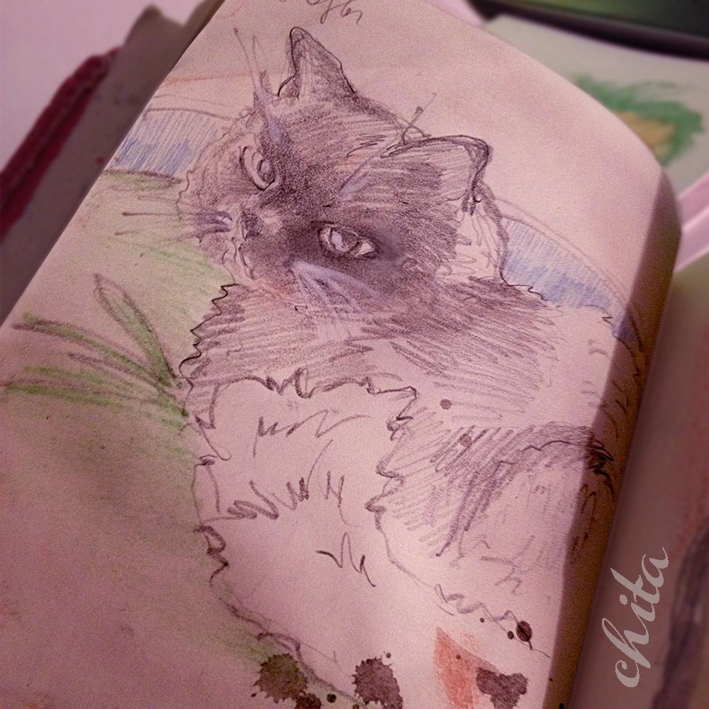 Mon chat Pouchkin croquis