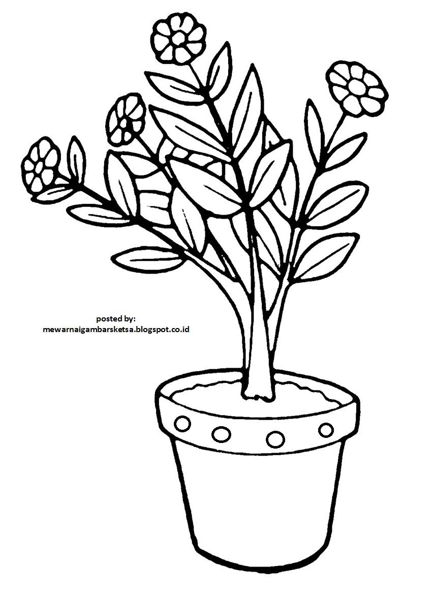 20 Inspirasi Sketsa Gambar Bunga Yang Ada Potnya Tea And Lead